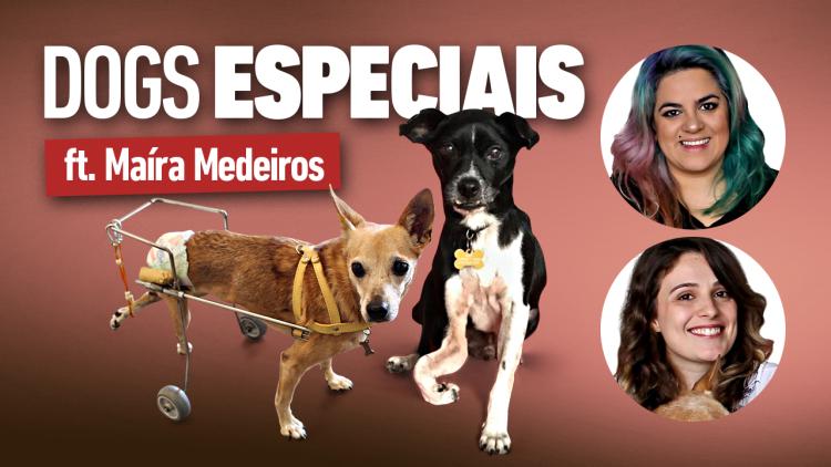 AUNIMAL_MATERIAIS_DE_YOUTUBE_DOGS_ESPECIAIS_3